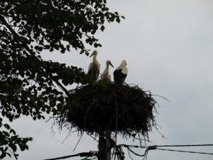 Gnijezdo u Rečici
